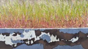 Gras mit Ähren wächst in einem Kasten, von dem braun und weiß die blaue Farbe abblättert