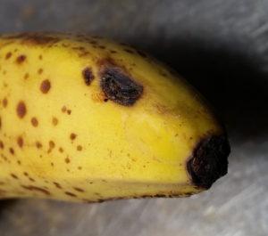 Das untere Ende einer Banane, der Abschluss wirkt wie eine Nase, ein Fleck auf der Schale wie ein Auge