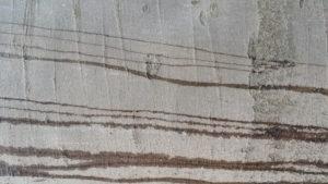 Dunkle Wasserstreifen auf heller Baumrinde mit Rillen